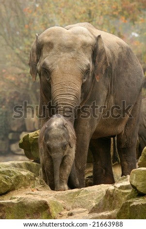 Baby and mother elephant - stock photo