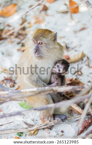 baby and mother monkey