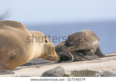Baby and Mother Sea Lion on the Shore of Espanola Island in the Galapagos - stock photo