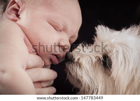 Baby and the dog portrait in the studio - stock photo