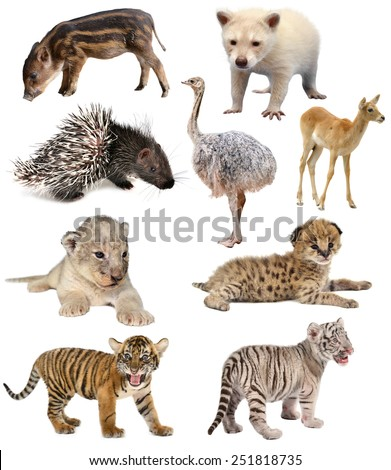 baby animals collection isolated on white background - stock photo