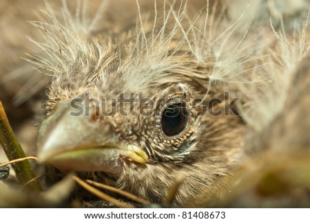 Baby Bird in Nest - stock photo