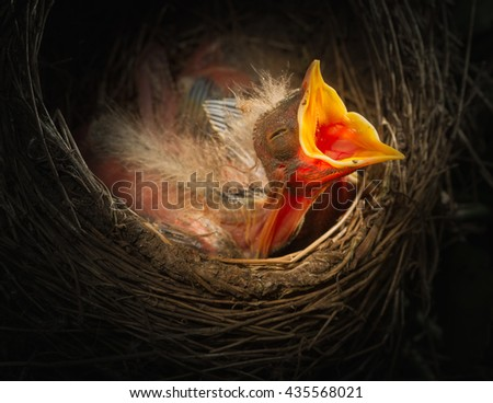 Baby bird in the nest with mouth open - stock photo