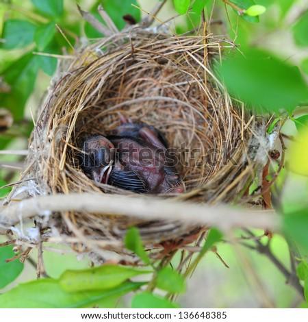Baby bird sleeping in the nest - stock photo