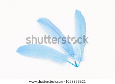 Baby blue feathers on white background