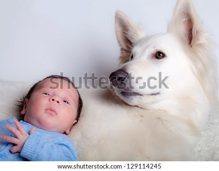 Baby boy and his friend, white swiss shepherd dog - stock photo