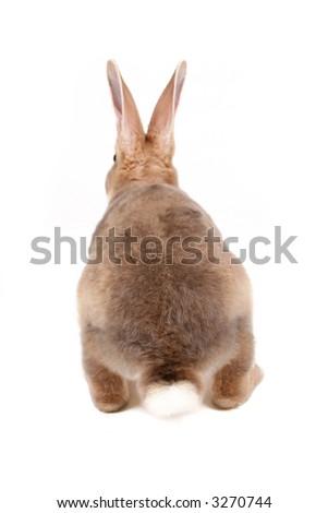 Baby bunny backside isolated on white - stock photo