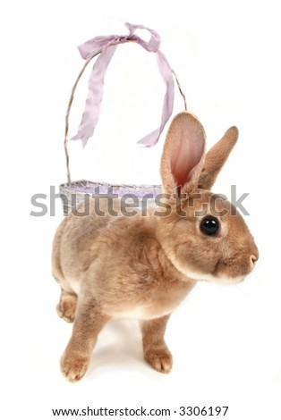 Baby bunny in front of easter basket - stock photo