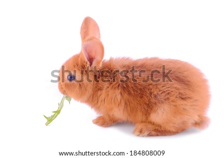 Baby bunny isolated on a white background