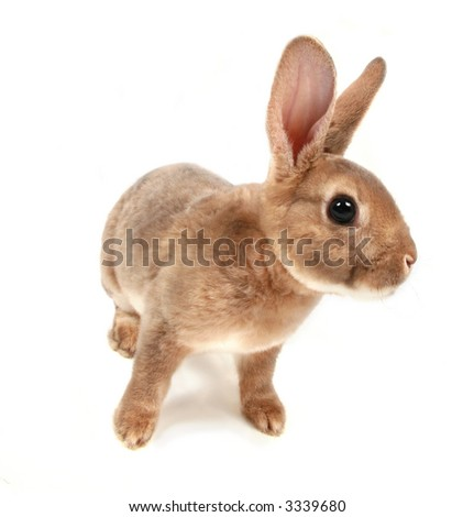 Baby bunny Isolated on white #3 - stock photo