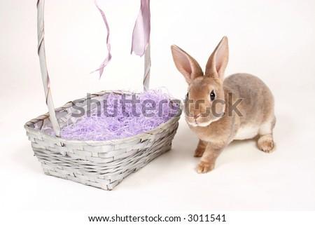 Baby bunny next to easter basket on white. - stock photo