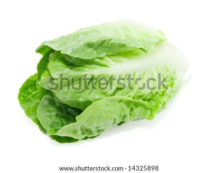 Baby cabbage on white background