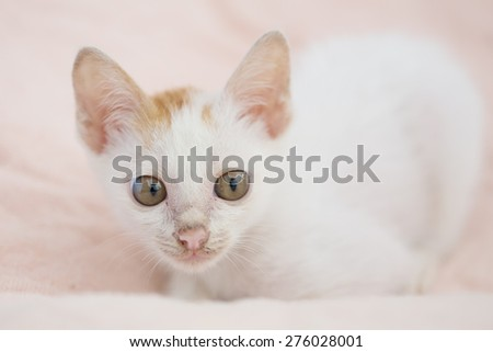 Baby cat be dirty - stock photo