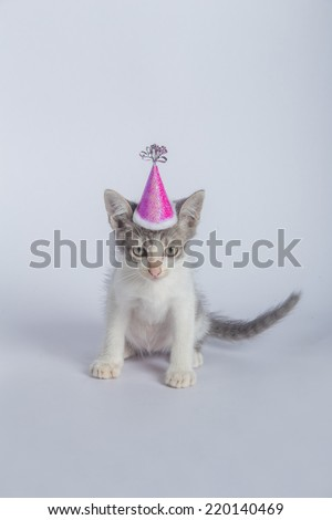 baby cat happy party - stock photo