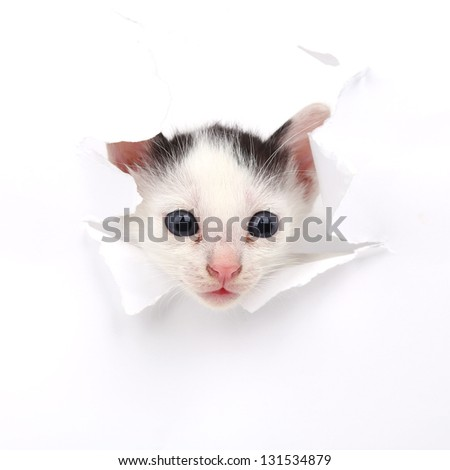 Baby cat in paper side torn hole isolated - stock photo