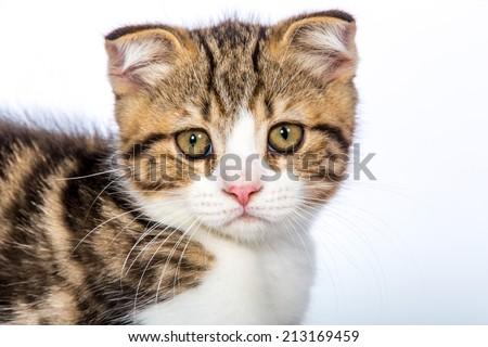 baby cat look at my eye - stock photo
