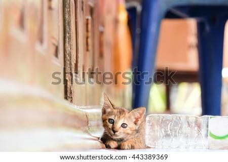 baby cat on wood - stock photo