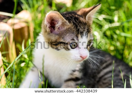 Baby Cat Playing In Grass - stock photo