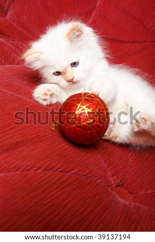 Baby cat playing with a red Christmas ball - stock photo