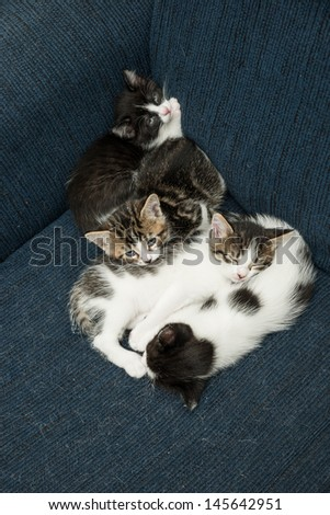 Baby cats cuddling together on a sofa and relaxing - stock photo