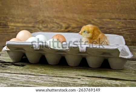 baby chicken in an egg carton with fresh eggs - stock photo