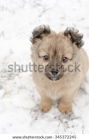 baby dog playing with snow. puppy dog in snow - stock photo