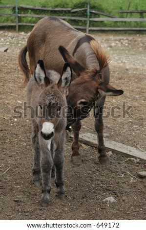Baby Donkey with Mother - stock photo