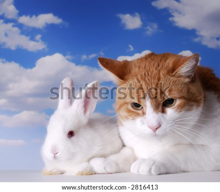 Baby Easter Bunny Next to Orange Tabby Cat - stock photo