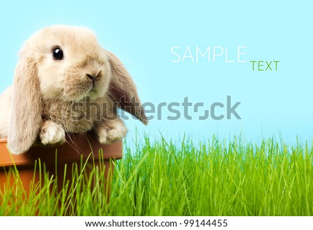 baby Easter bunny on spring green grass - stock photo