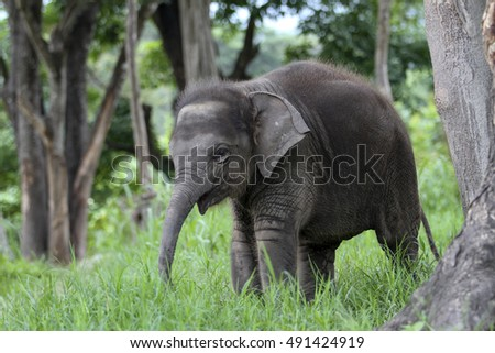 Baby Elephant in the forest