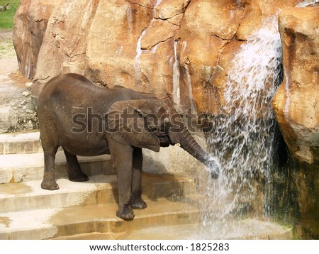 Baby Elephant is playing with water - stock photo