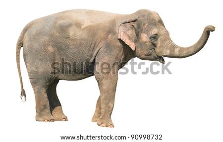 Baby Elephant Isolated on White - stock photo
