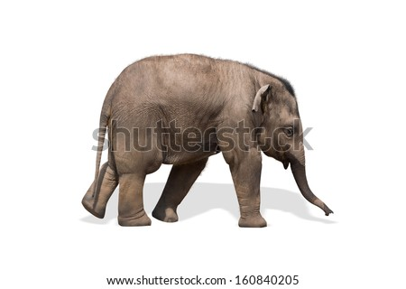 Baby elephant isolated on white. Clipping path included. - stock photo