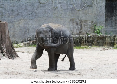 Baby Elephant playing alone in the national park.
