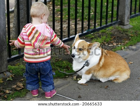 baby girl holding out hand to corgi dog