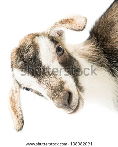 baby goat head on a white background - stock photo