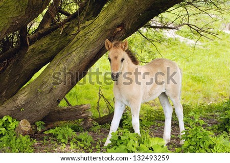 baby horse in beautiful landscape - stock photo