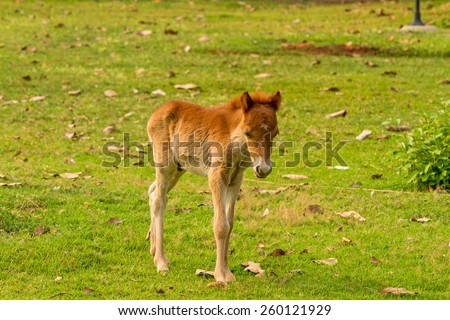 Baby horse in green grass - stock photo