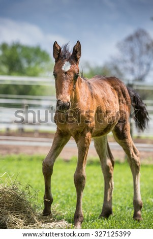 baby Horse looking at the camera