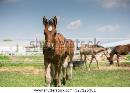Baby Horses walking up to the camera