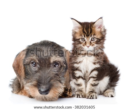 Baby kitten and puppy together. isolated on white background