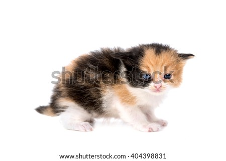 Baby kitten isolated in white