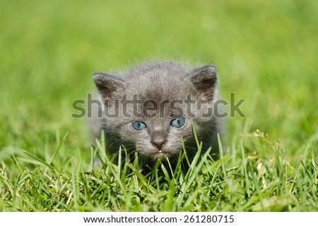 Baby kitten on the green grass - stock photo