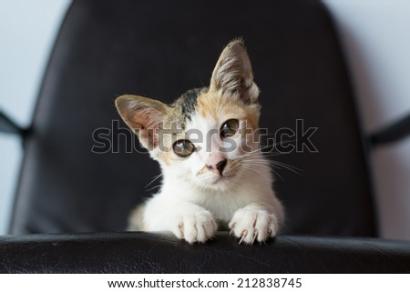 baby kitten sitting on chair - stock photo