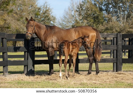 Baby mare and foal horse in pasture