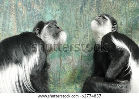 baby monkey - stock photo