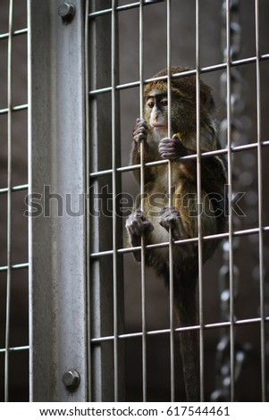 baby monkey cage stock photo royalty free 617544461 shutterstock