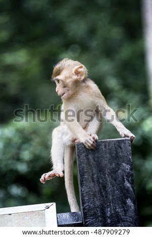 Baby Monkey playing. At THailand forest