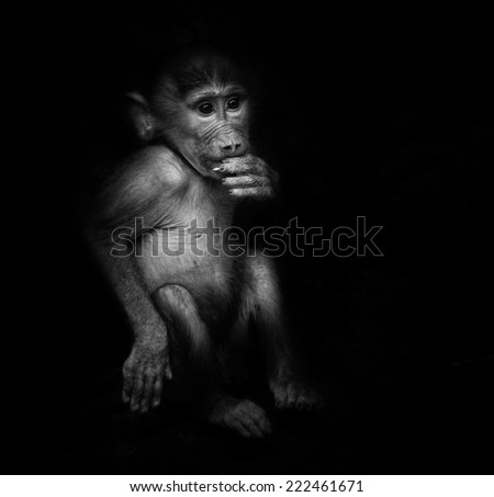 Baby orangutan monkey smiling - black  background - stock photo