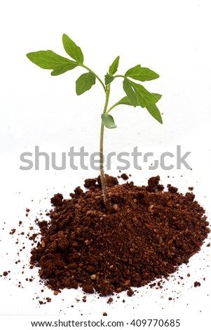 Baby plant against white background - stock photo